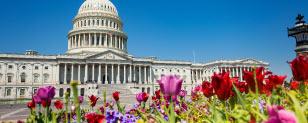Thank Congress for a New Year of Pork Barrel Spending
